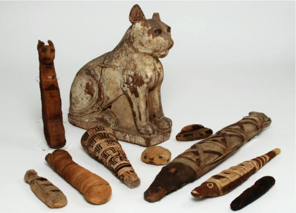 Various-animal-mummies-from-ancient-Egypt