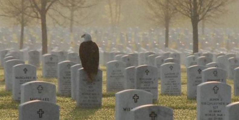 This One Photo: An Eagle on a gravestone at Fort Snelling National Cemetery