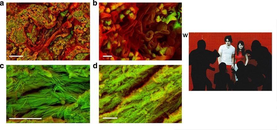 Scientists break dinosaur bones, find red blood cells
