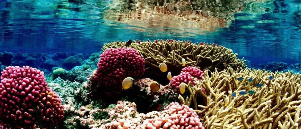 Coral Heat resistance: nature toughens up against pollution