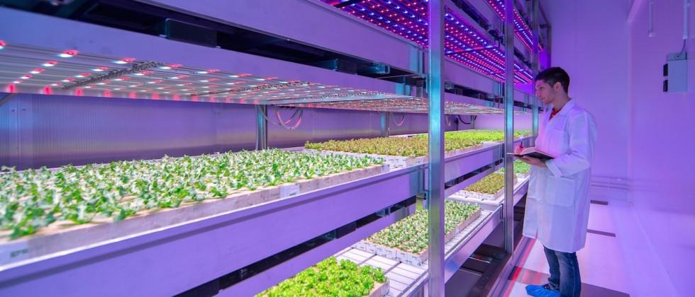 Philips is developing LED 'light growth recipes' for indoor farms