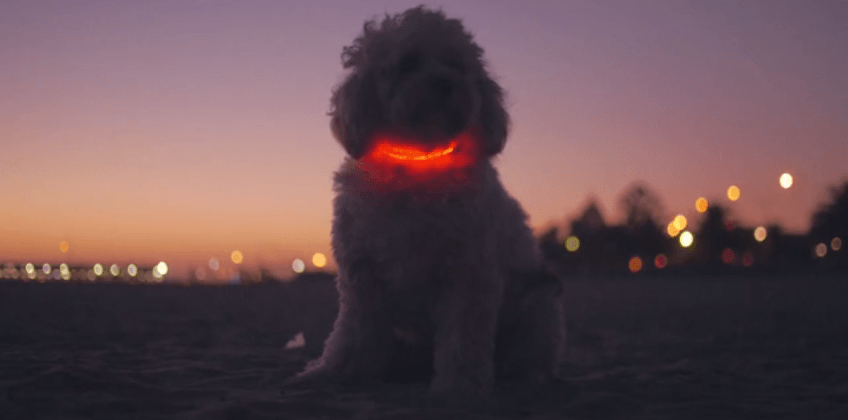 Buddy smart dog collar includes geo-tracking, stylish LED glow