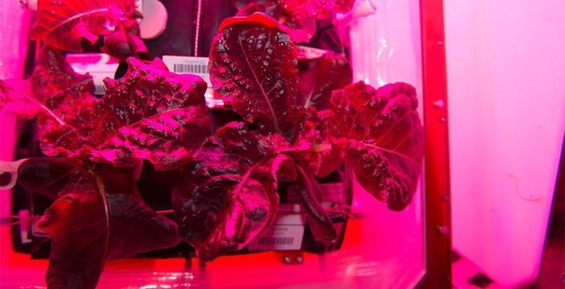 ISS astronauts sample veggies grown in space