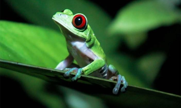 Suburban landscaping is (maybe) turning frogs female
