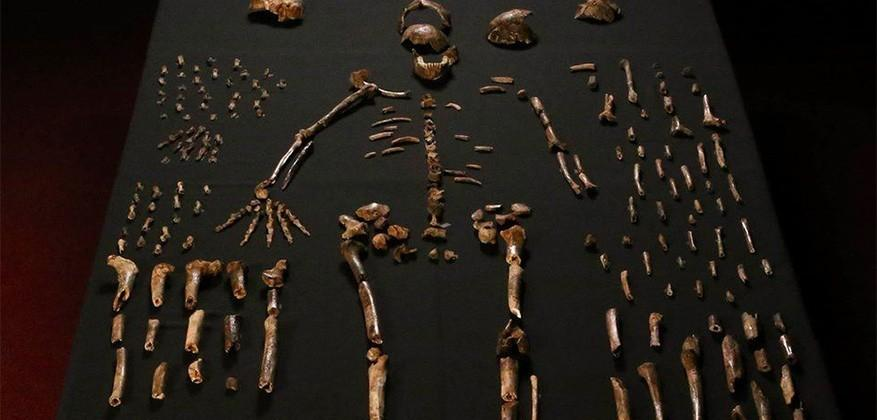 Homo naledi, a human-like species, discovered in South Africa
