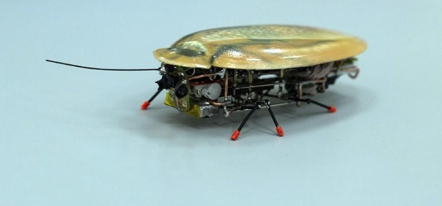 Russian researchers make realistic robot cockroaches