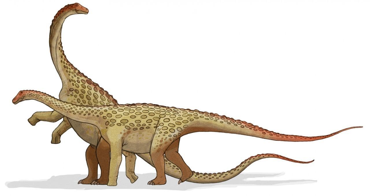 Saltasaurus_dinosaur