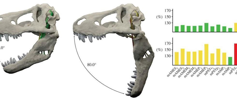 T-Rex study shows how terrifying dinosaurs' jaw truly was