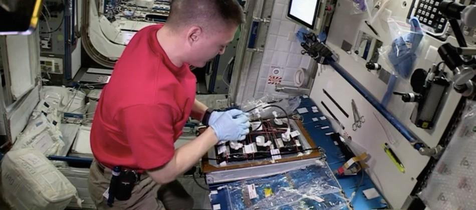NASA moves from growing veggies to flowers on the ISS
