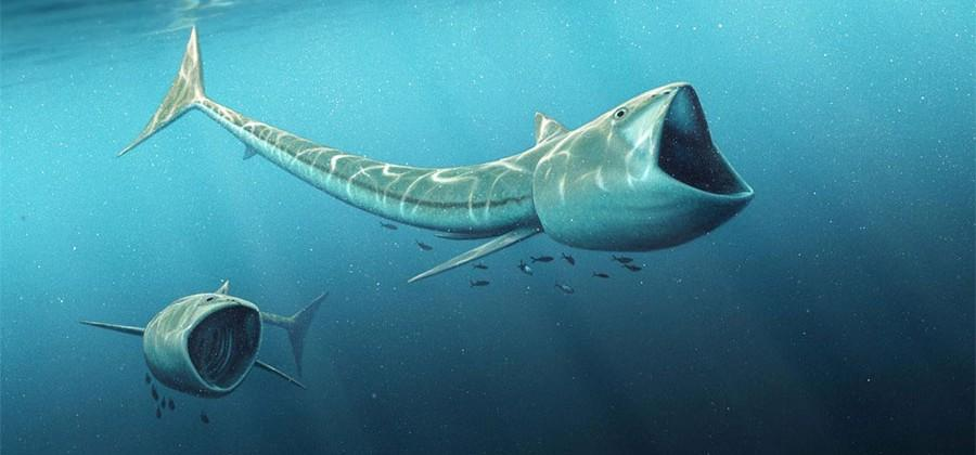 Scientists discover two new fossil fish species with gigantic mouths