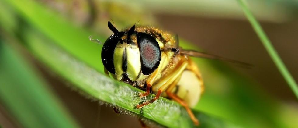 Wasp GPS could help smart drones find home faster