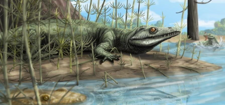 New reptile species discovered with 250 million year old fossil
