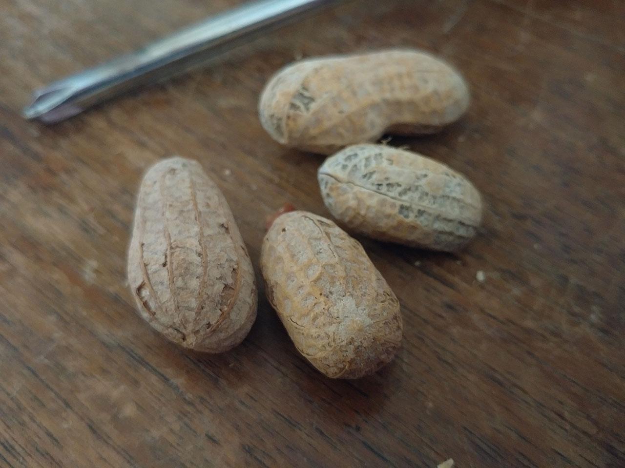 peanuts_lgg5