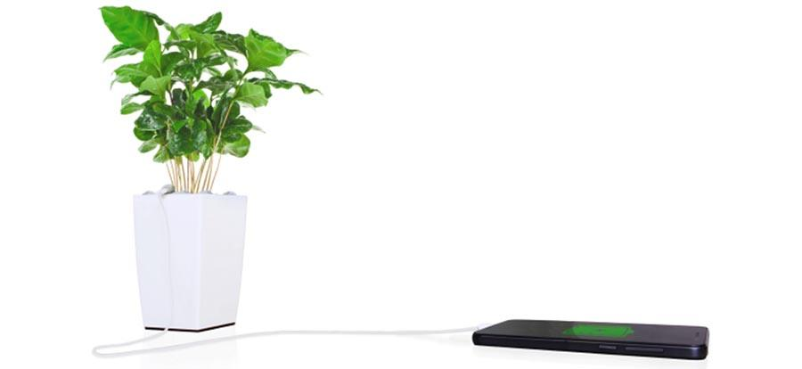 Bioo pot uses plants to charge your phone