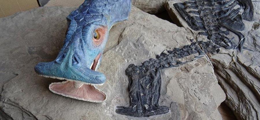 Ancient 'hammerhead' reptile found in southern China