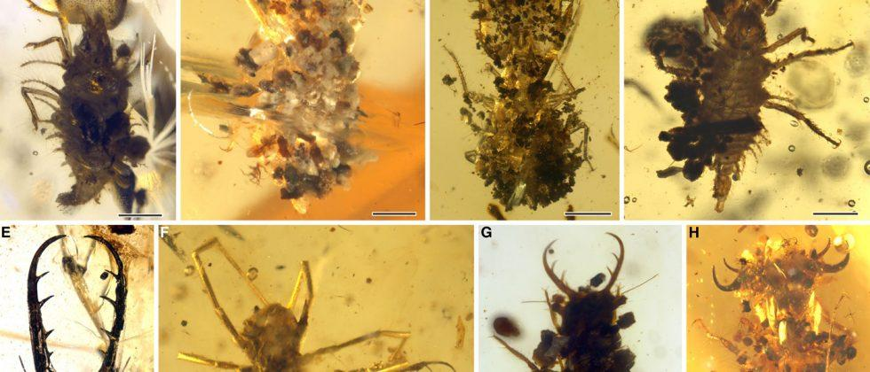 Ancient, disguised insects discovered in amber fossils