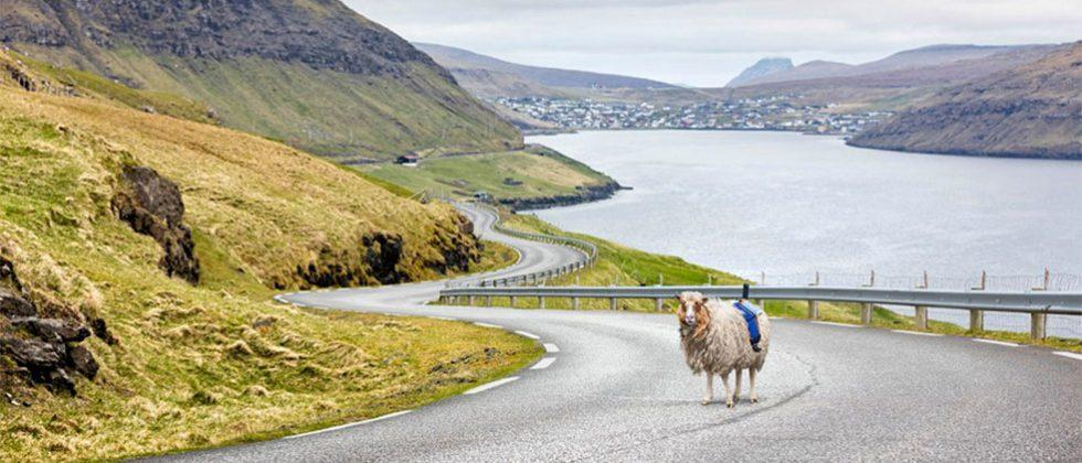Sheep View 360 invented because Street View wasn't there