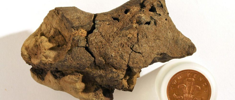 Scientists discover first known fossil of dinosaur brain tissue