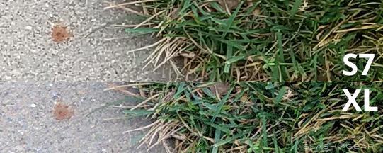 closegrass