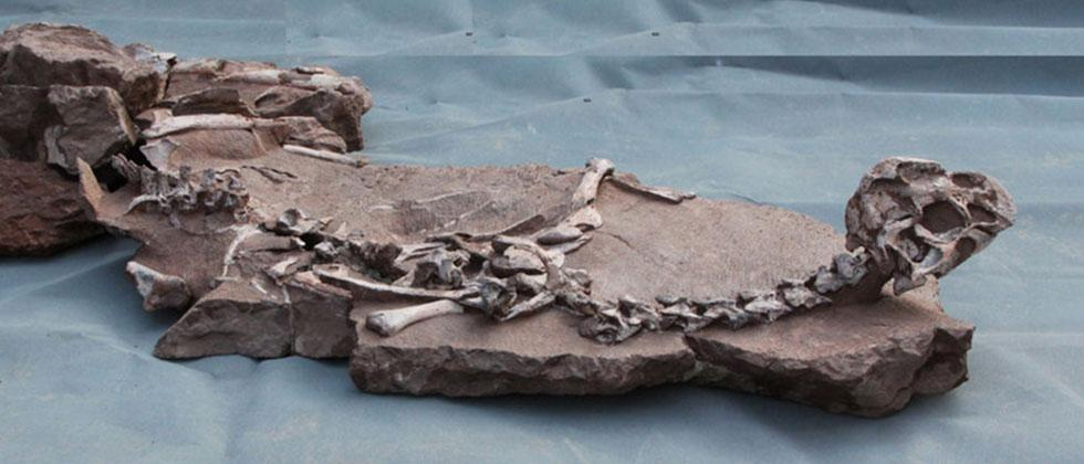 Dinosaur Games: Mud Dragon strikes out in ancient pit