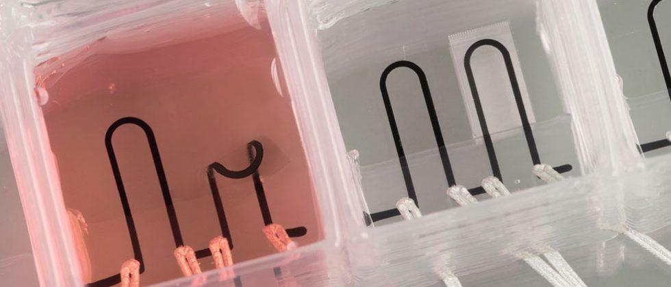 Harvard researchers create 3D printed heart-on-a-chip with sensors inside