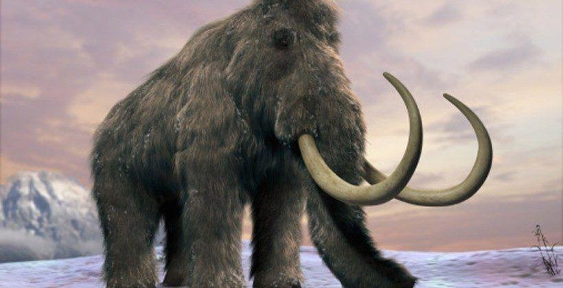 Lab-made wooly mammoth embryos are only two years away
