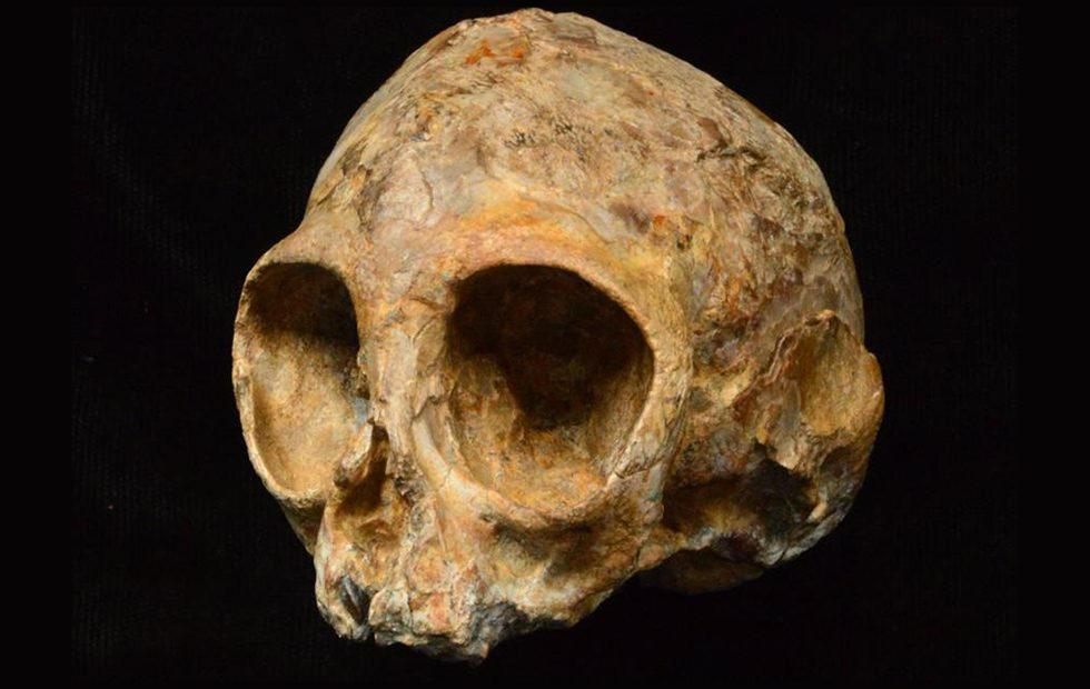 Baby skull unearthed in Africa belonged to ancient human ancestor