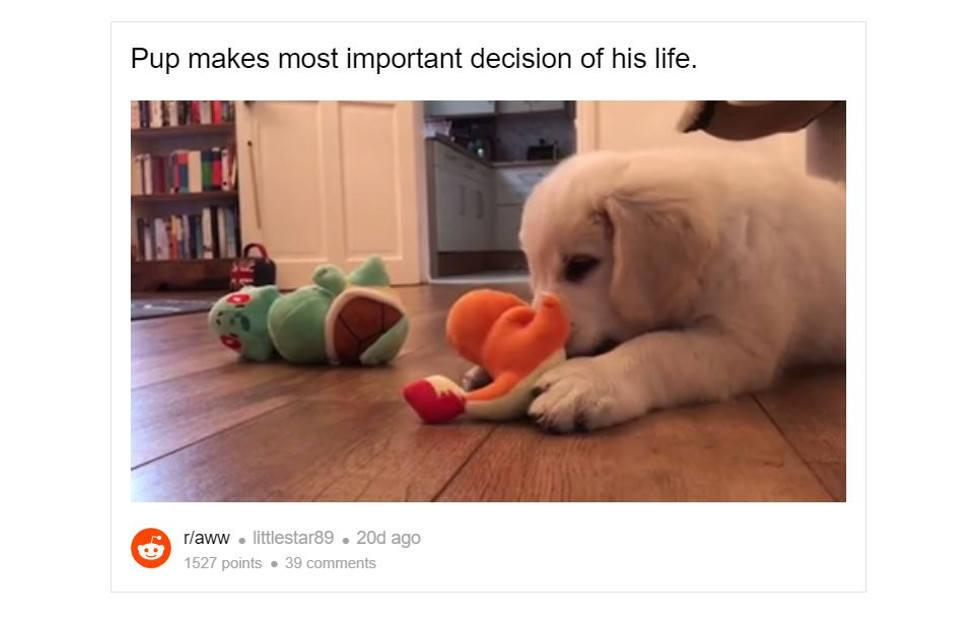Reddit to embed videos on any topic under the sun or beyond