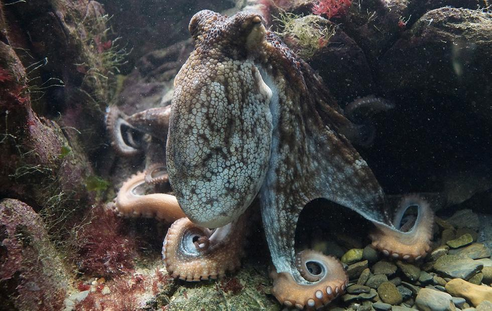 Researchers develop 3D morphing material inspired by cephalopods