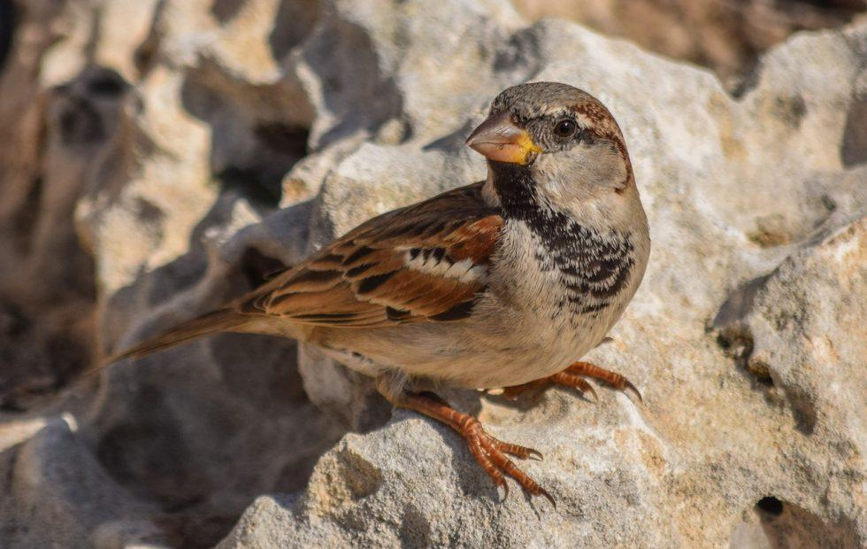 Noise pollution is stressing birds and the health effects are serious