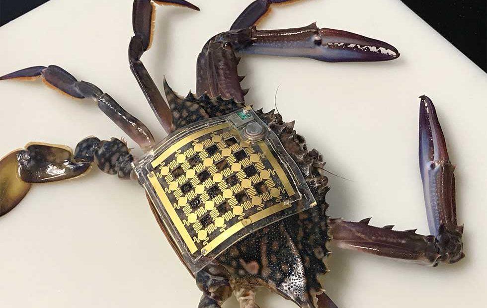 """Marine skin"" wearable technology tracks underwater creatures"