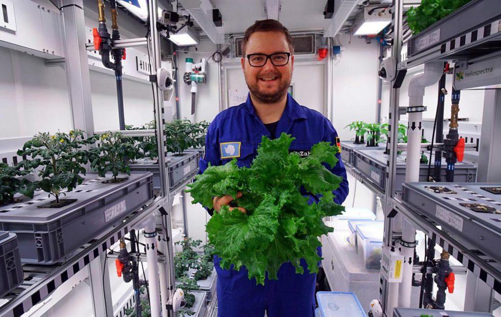 Scientists harvest the first veggies from fancy Antarctic greenhouse