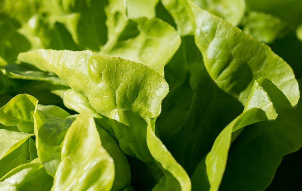 CDC: E. coli infections from romaine lettuce are spreading