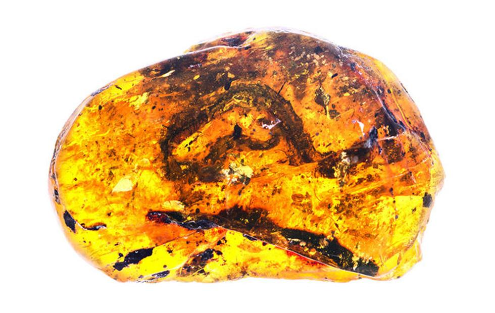 100-million-year-old baby snake in amber sheds light on evolution