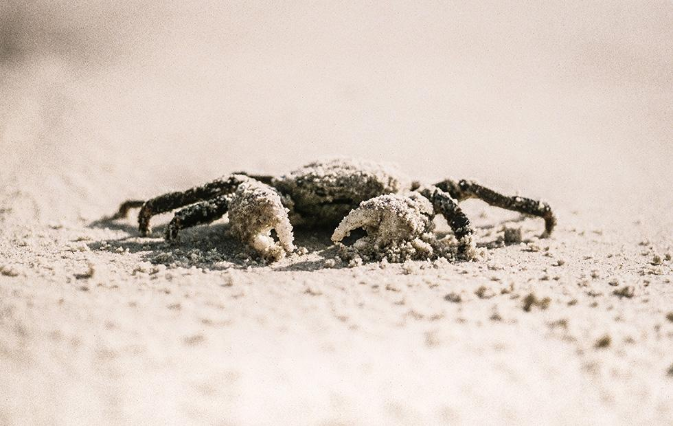 Insanely angry Canadian crabs are causing chaos in coastal waters