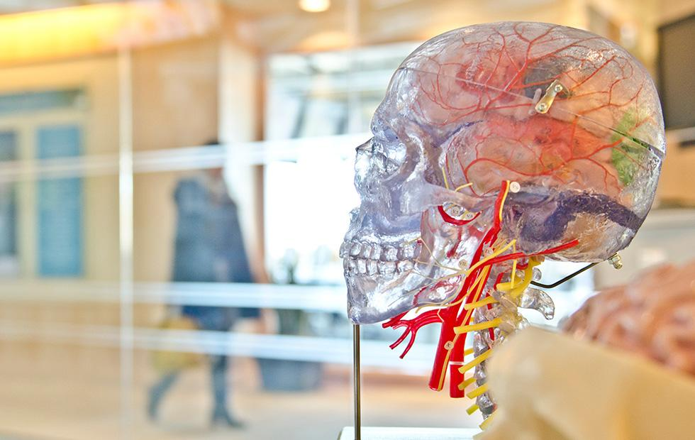 Stress in middle age linked with reduced memory and brain shrinkage