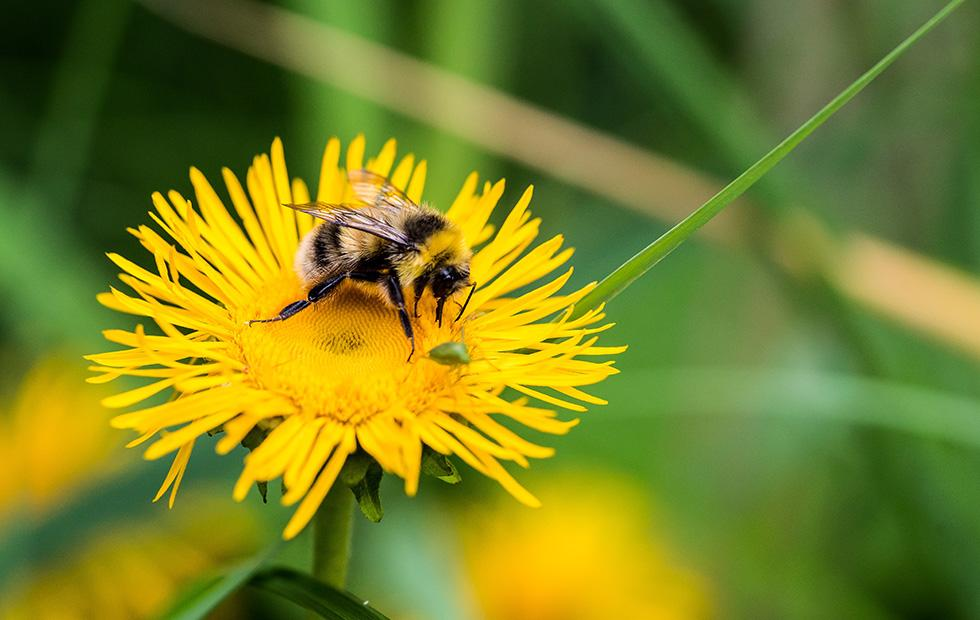 Popular insecticide throws bumblebee populations into chaos