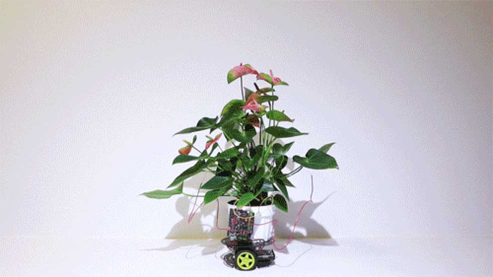 MIT creates a part robot, and part plant contraption called Elowan