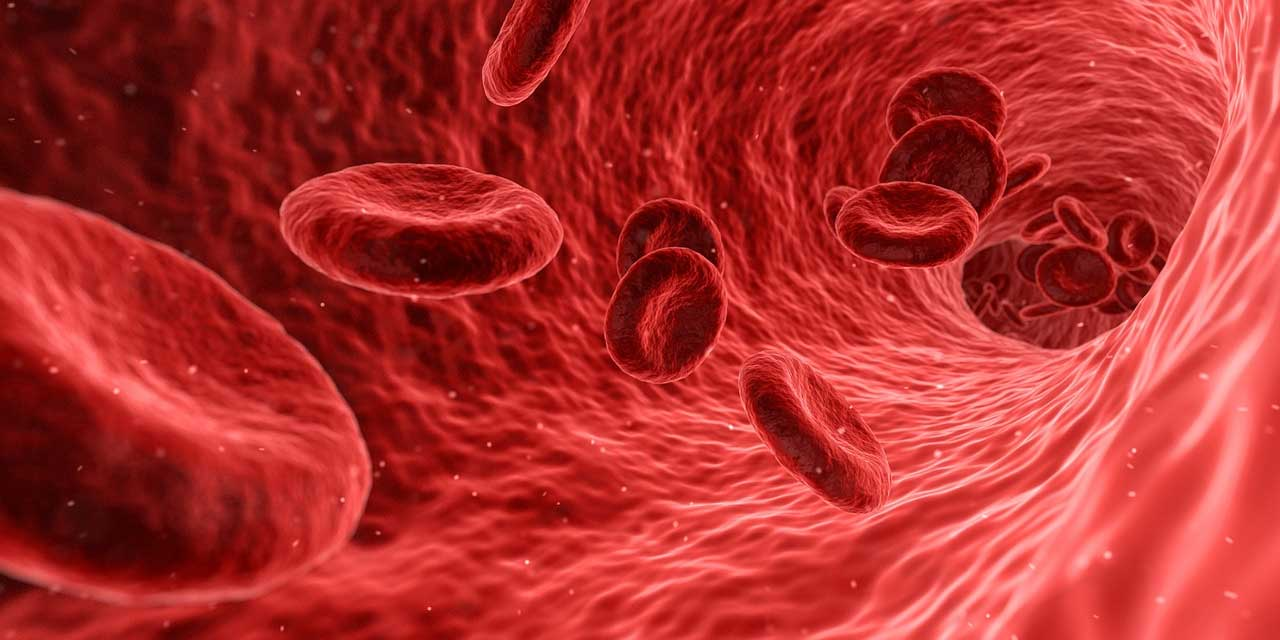 Lab-grown human blood vessels could advance research of vascular disease -  SlashGear