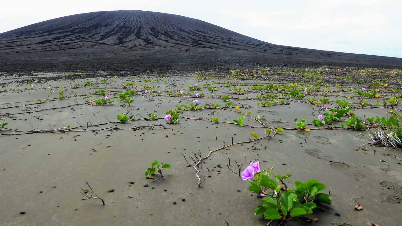 World's newest island is covered in mysterious mud and vegetation