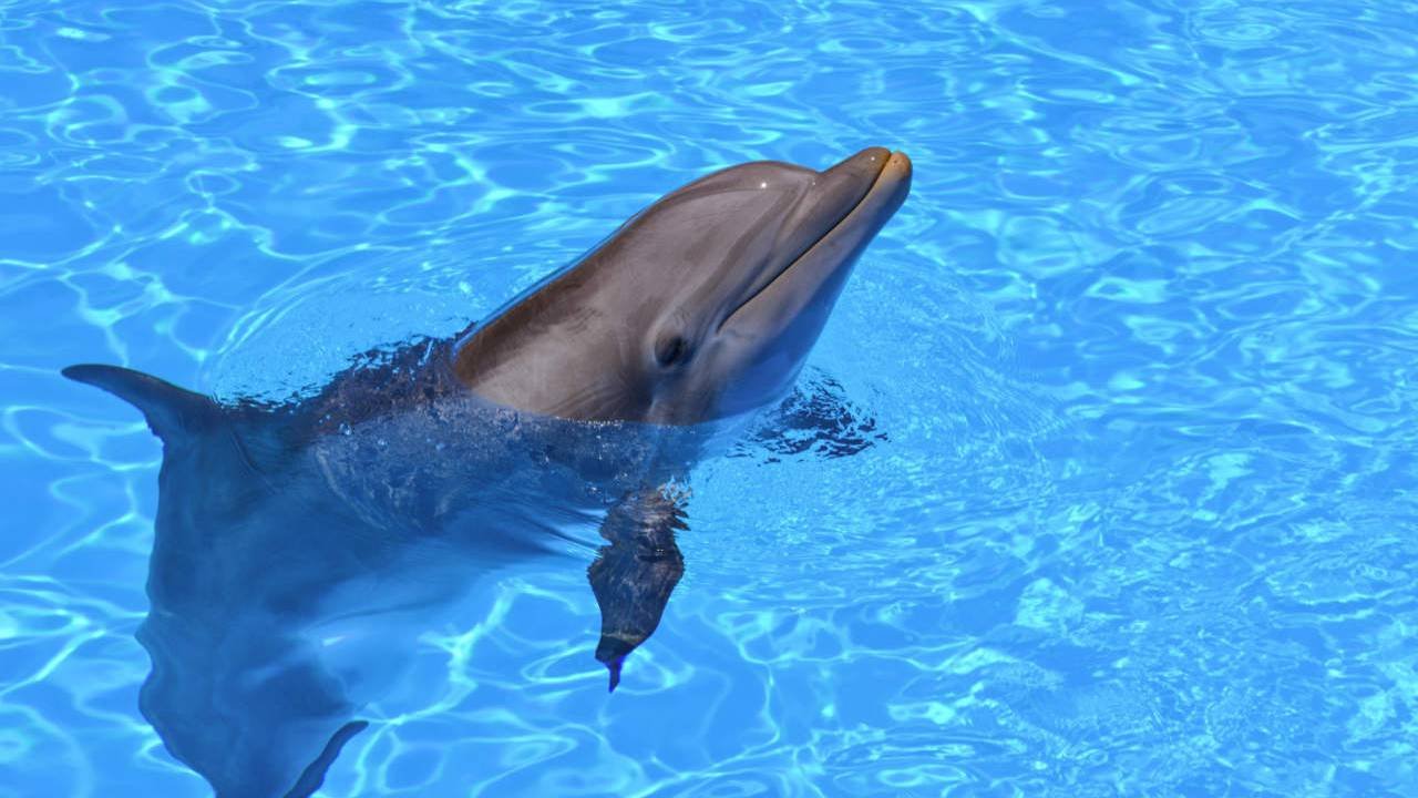 Alzheimer's plaques found in dolphins' brains hint at toxin risk