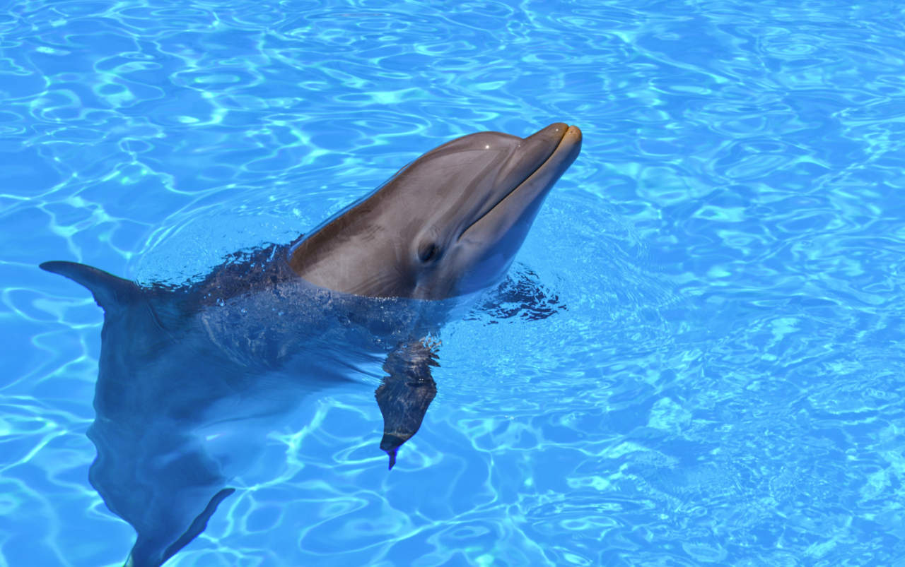 Alzheimer's plaques, found in the dolphin brain, suggest a