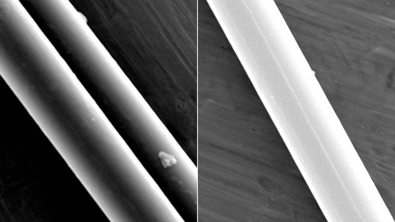 Spider silk could be used as muscles in robots thanks to a new discovery