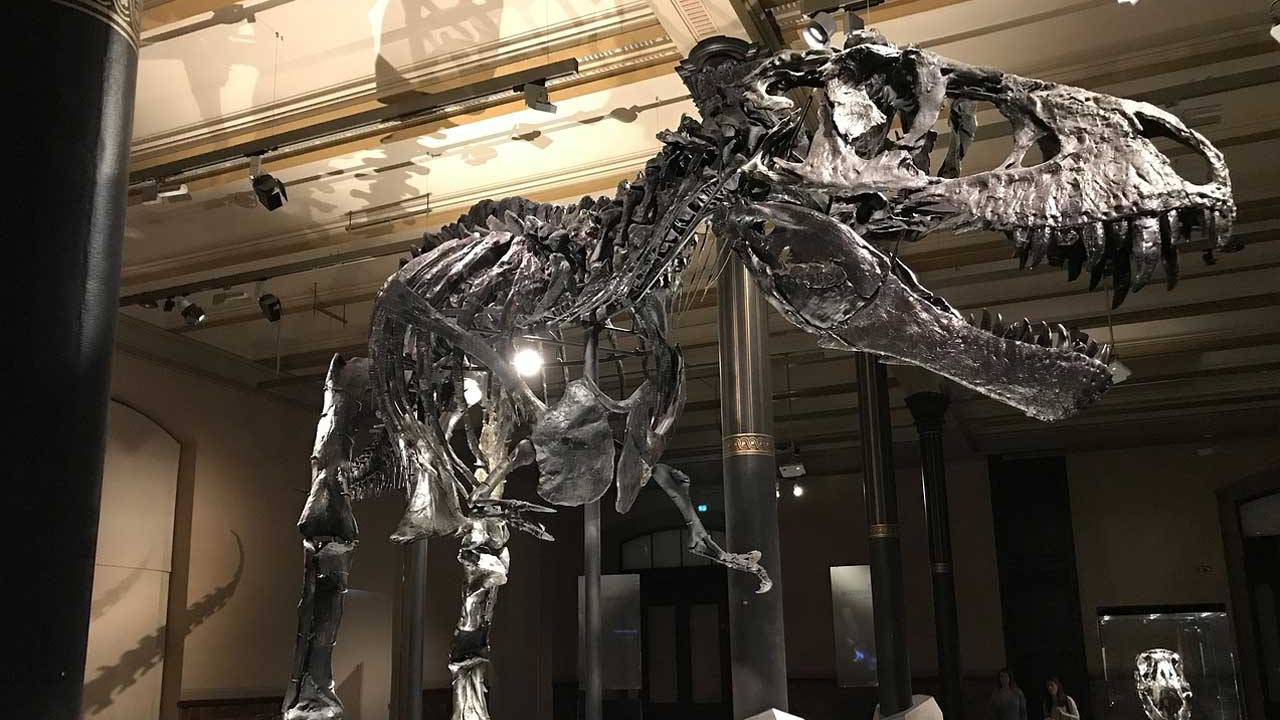The largest T-Rex ever discovered is called Scotty