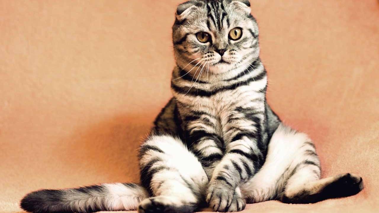 Researchers find cats can tell their names from other words