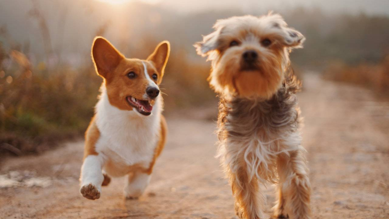 You may be genetically hardwired to love dogs