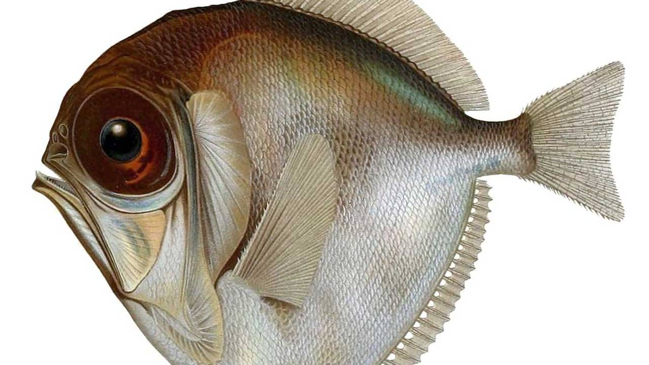 Scientists say fish living in the deep, dark ocean can see color