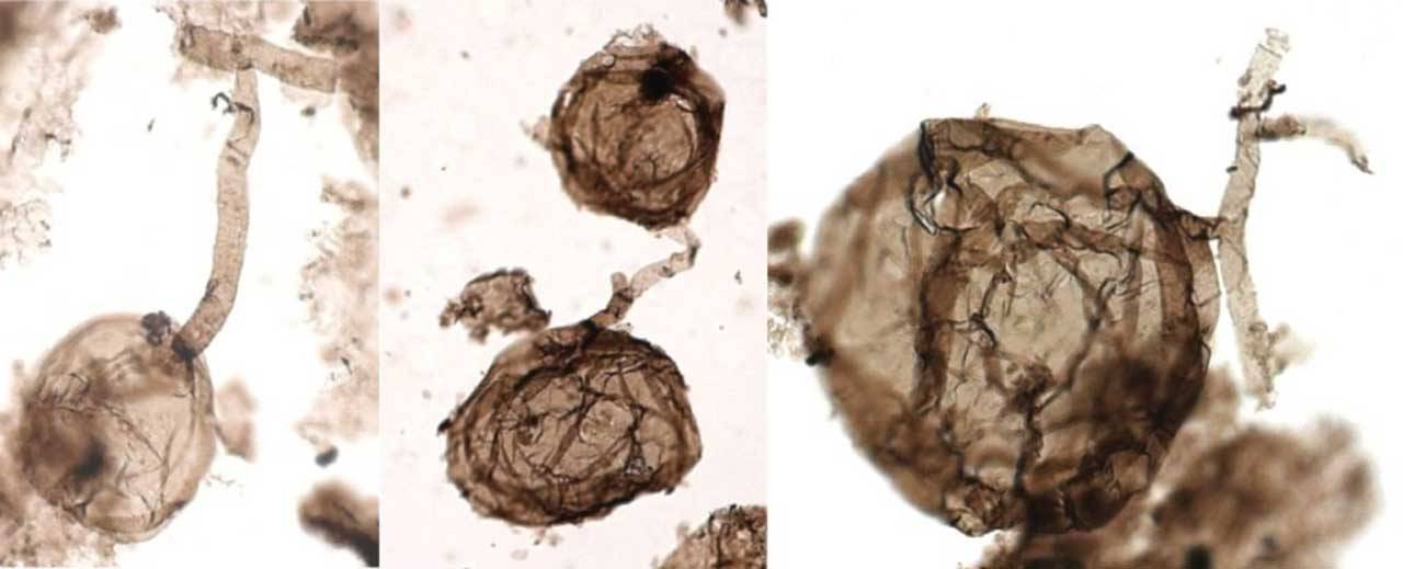 Scientists discover billion-year-old fungus fossil