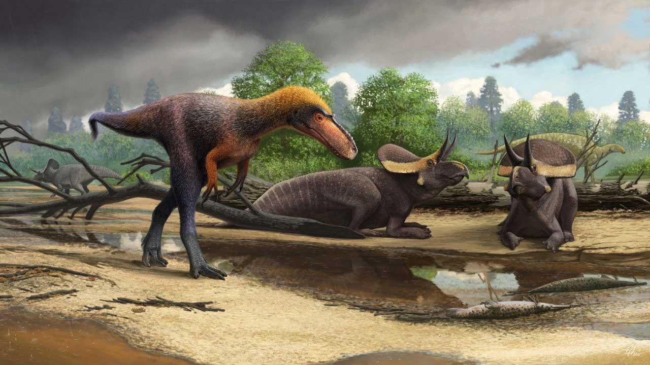 Paleontologist discover new T-rex relative and dub it Suskityrannus