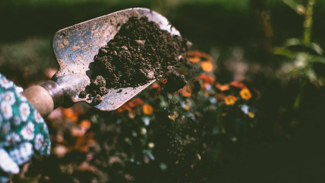 Glowing dirt could help scientists develop new biofuels and super crops
